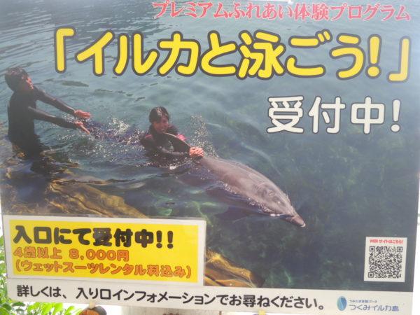 イルカ島のイルカと泳ぐ体験