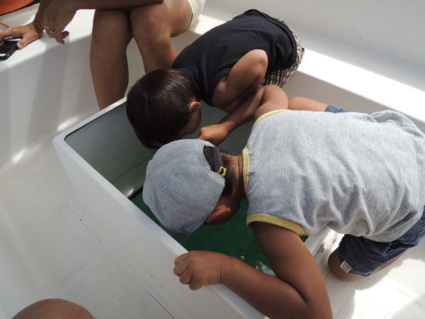 イルカ島のボート
